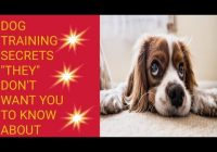 Dog Training Secrets They Don't Want You To Know